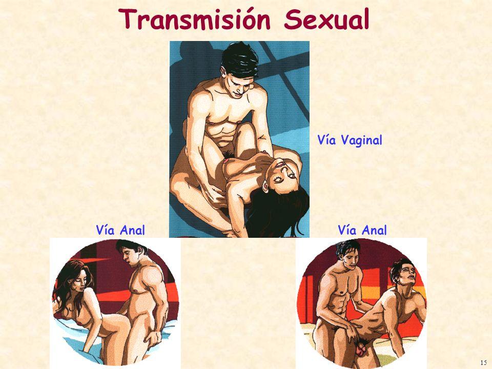 Vía Vaginal Transmisión Sexual 15 Vía Anal