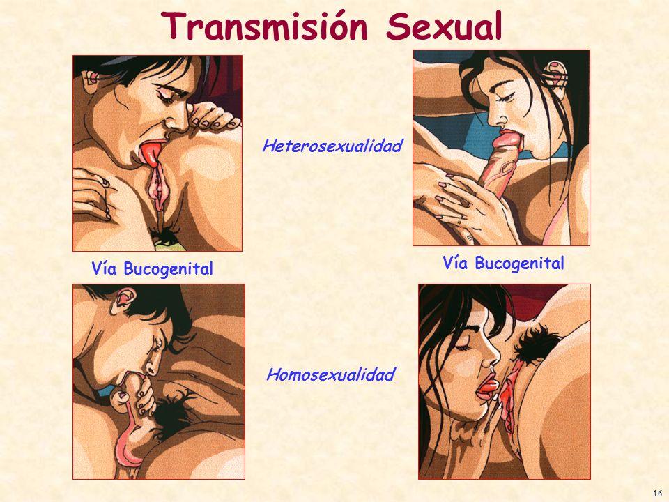 Vía Bucogenital Transmisión Sexual Vía Bucogenital Heterosexualidad Homosexualidad 16