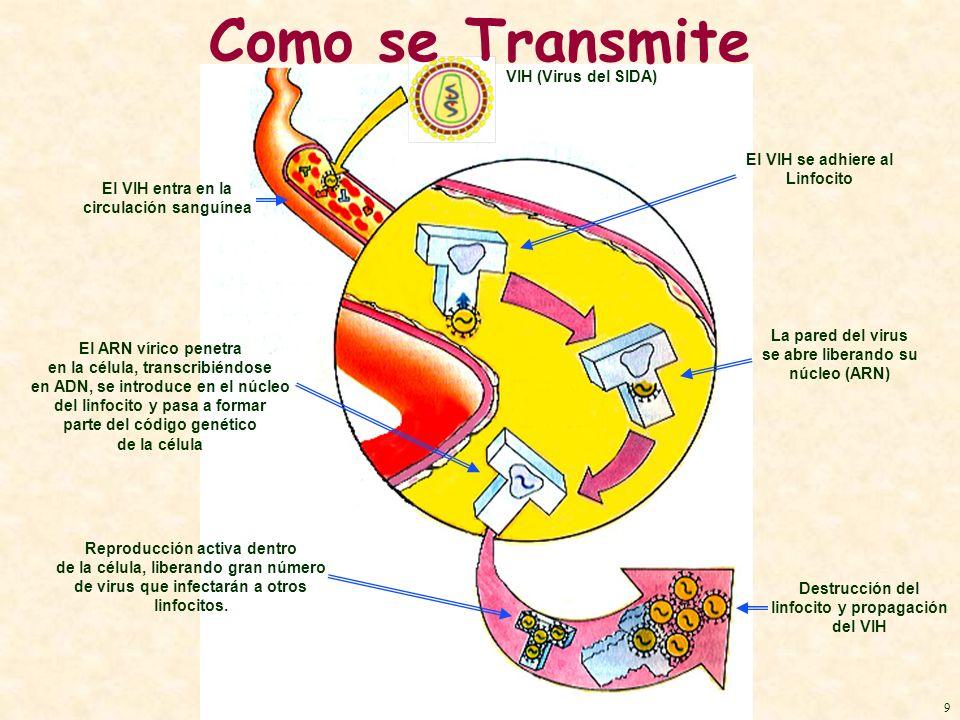 VIH (Virus del SIDA) El VIH entra en la circulación sanguínea El VIH se adhiere al Linfocito La pared del virus se abre liberando su núcleo (ARN) El A
