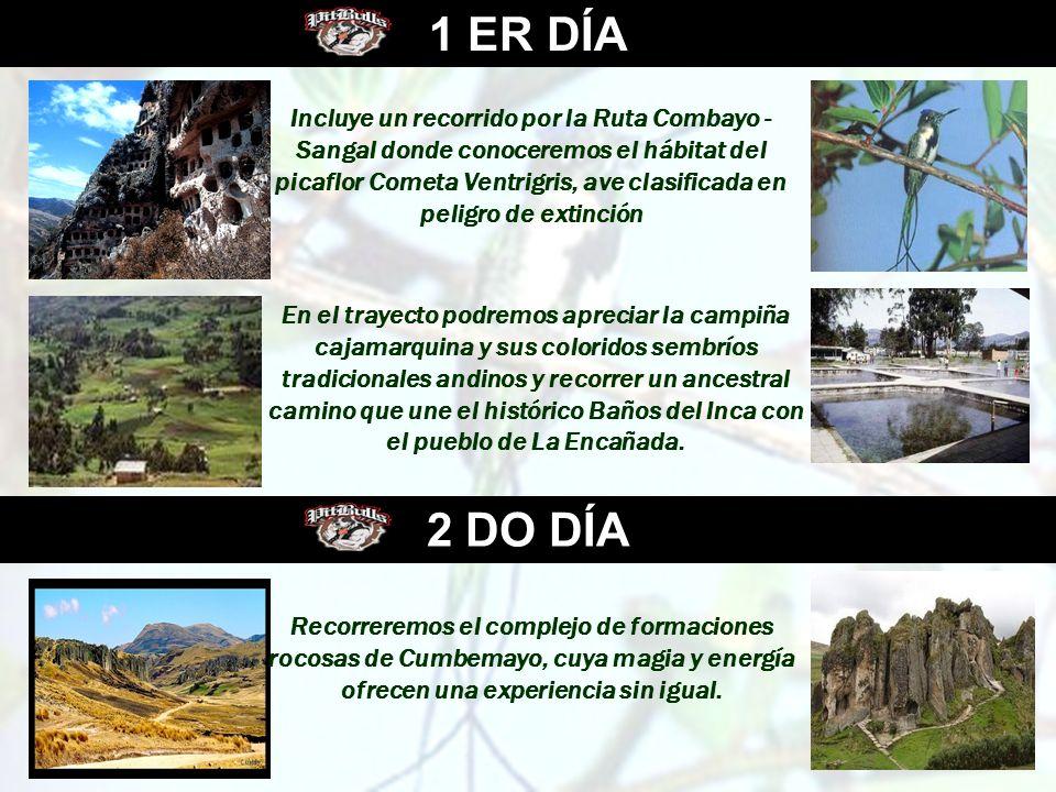 1 ER DÍA 2 DO DÍA Incluye un recorrido por la Ruta Combayo - Sangal donde conoceremos el hábitat del picaflor Cometa Ventrigris, ave clasificada en pe