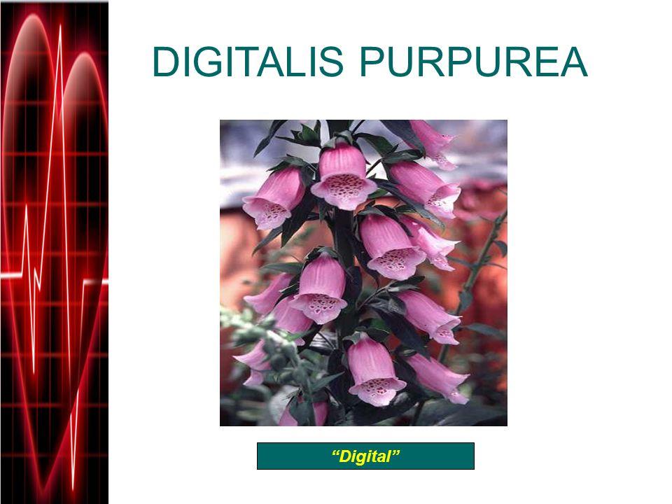 DIGITALIS PURPUREA Digital