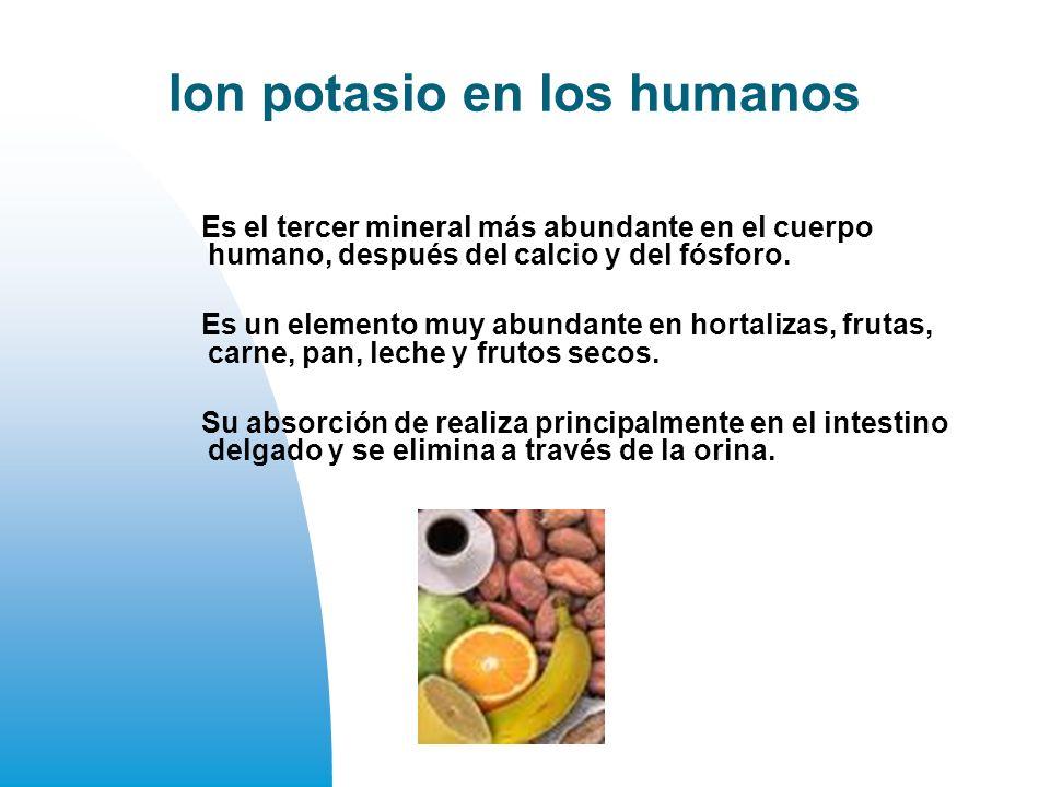 Ion potasio en los humanos Es el tercer mineral más abundante en el cuerpo humano, después del calcio y del fósforo.