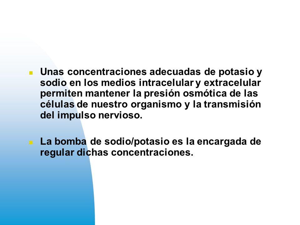 Unas concentraciones adecuadas de potasio y sodio en los medios intracelular y extracelular permiten mantener la presión osmótica de las células de nuestro organismo y la transmisión del impulso nervioso.