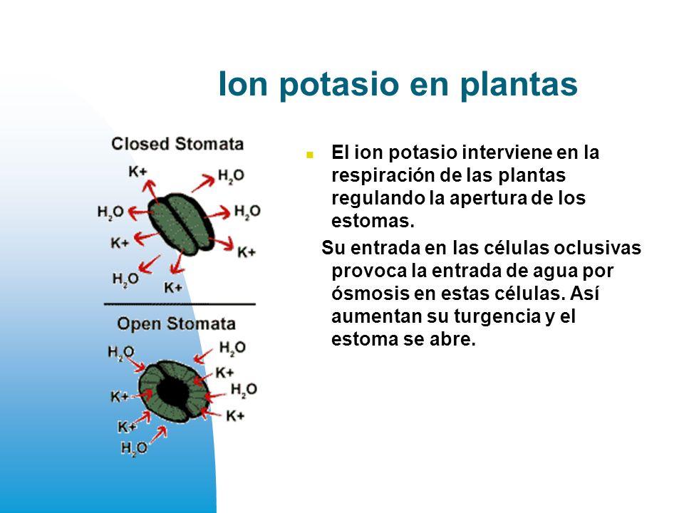 Ion potasio en plantas El ion potasio interviene en la respiración de las plantas regulando la apertura de los estomas.