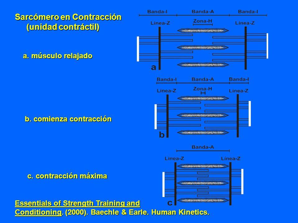 a. músculo relajado b. comienza contracción c. contracción máxima Essentials of Strength Training and Conditioning. (2000). Baechle & Earle. Human Kin