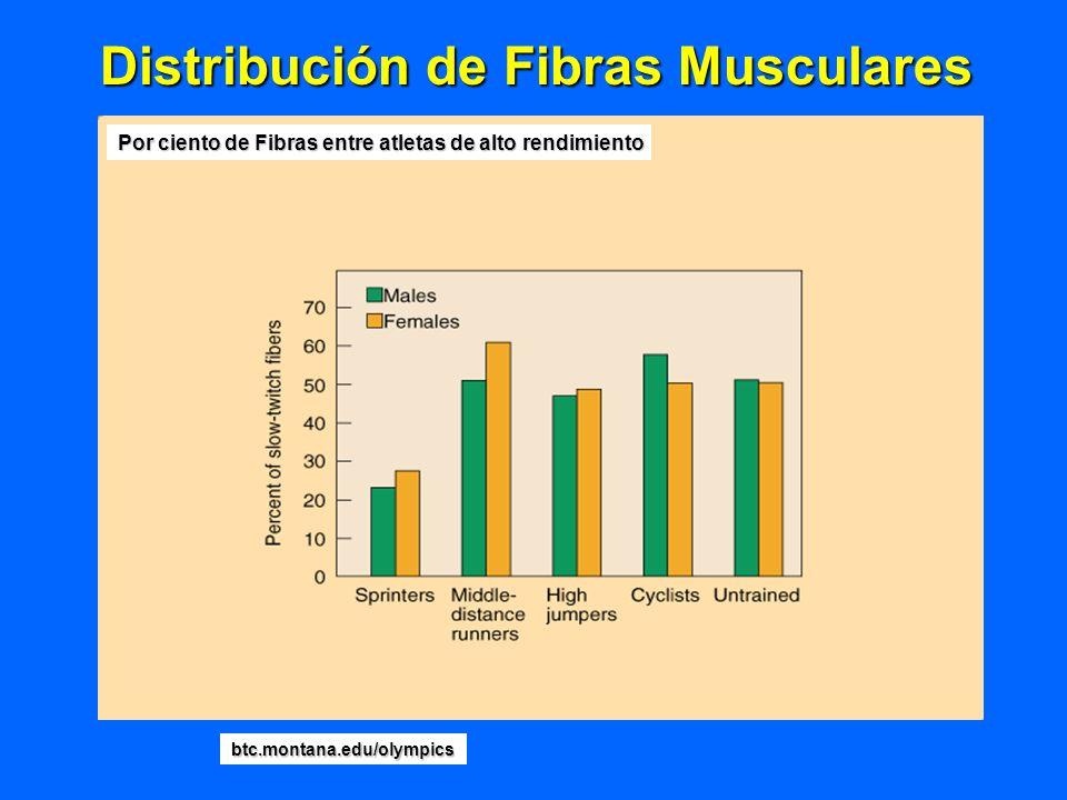 Distribución de Fibras Musculares Por ciento de Fibras entre atletas de alto rendimiento btc.montana.edu/olympics