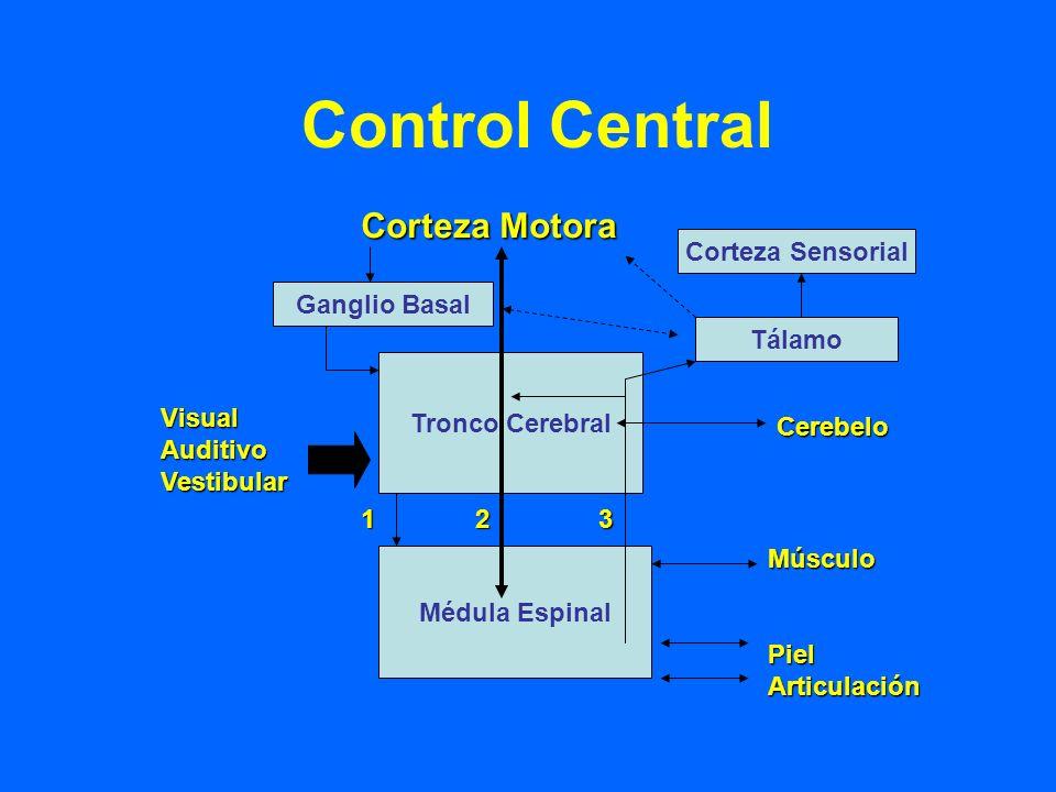 Control Central Corteza Motora Corteza Sensorial Tronco Cerebral Médula Espinal Ganglio Basal Tálamo Cerebelo MúsculoPielArticulación VisualAuditivoVe