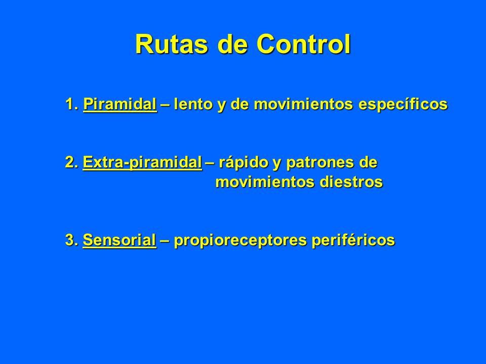 Rutas de Control 1.Piramidal – lento y de movimientos específicos 2. Extra-piramidal – rápido y patrones de movimientos diestros movimientos diestros