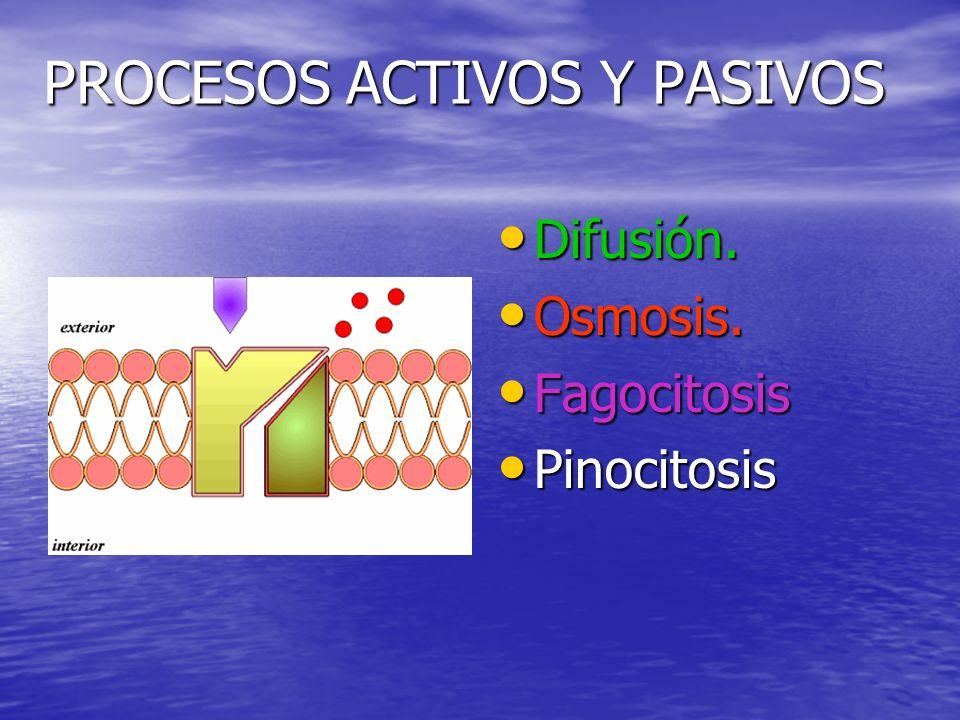 PROCESOS ACTIVOS Y PASIVOS Difusión.Difusión. Osmosis.