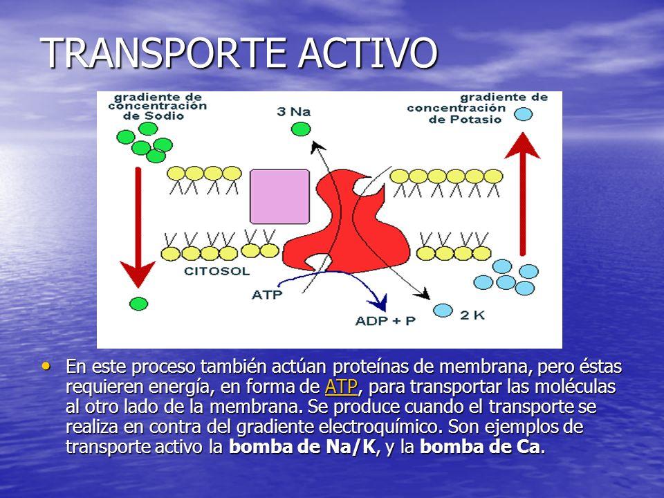 TRANSPORTE ACTIVO En este proceso también actúan proteínas de membrana, pero éstas requieren energía, en forma de ATP, para transportar las moléculas al otro lado de la membrana.