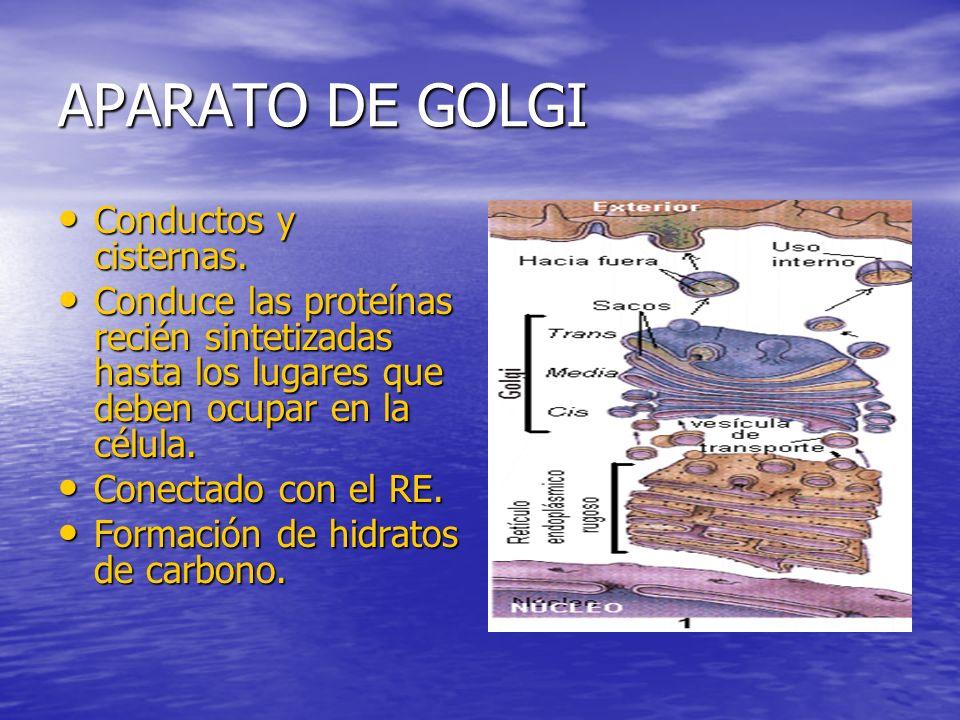 APARATO DE GOLGI Conductos y cisternas.Conductos y cisternas.