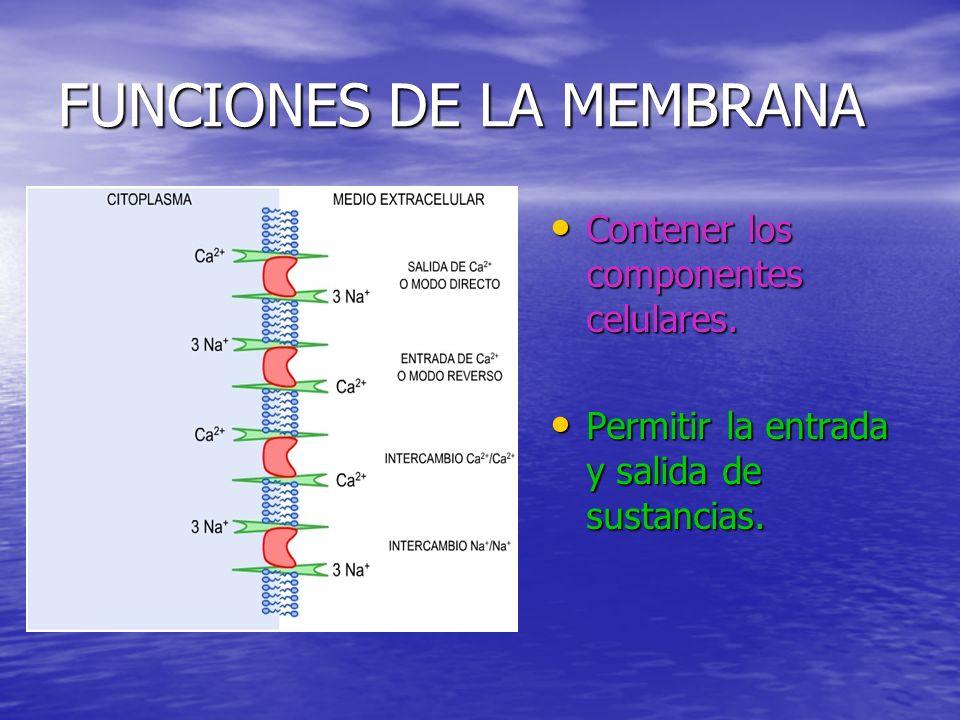FUNCIONES DE LA MEMBRANA Contener los componentes celulares.
