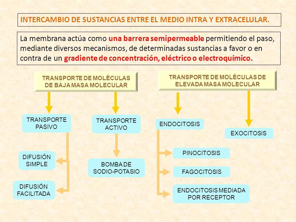 INTERCAMBIO DE SUSTANCIAS ENTRE EL MEDIO INTRA Y EXTRACELULAR. La membrana actúa como una barrera semipermeable permitiendo el paso, mediante diversos
