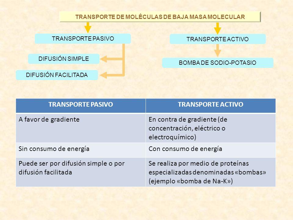 TRANSPORTE DE MOLÉCULAS DE BAJA MASA MOLECULAR BOMBA DE SODIO-POTASIO DIFUSIÓN FACILITADA DIFUSIÓN SIMPLE TRANSPORTE PASIVO TRANSPORTE ACTIVO TRANSPOR