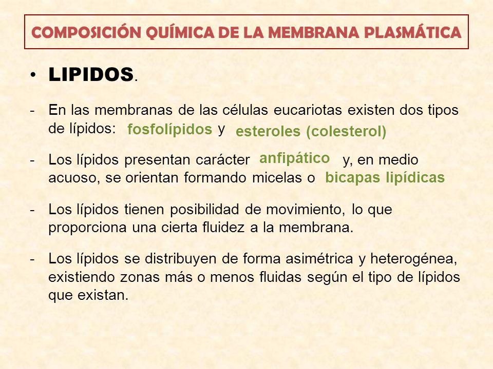 COMPOSICIÓN QUÍMICA DE LA MEMBRANA PLASMÁTICA LIPIDOS. -En las membranas de las células eucariotas existen dos tipos de lípidos: y -Los lípidos presen