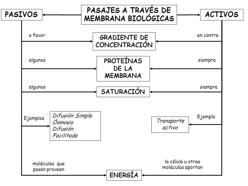 PASAJES A TRAVÉS DE MEMBRANA BIOLÓGICAS ACTIVOS ENERGÍA GRADIENTE DE CONCENTRACIÓN PASIVOS PROTEÍNAS DE LA MEMBRANA Difusión Simple Ósmosis Difusión Facilitada Transporte activo Ejemplo a favor moléculas que pasan proveen algunos la célula u otras moléculas aportan siempre Ejemplos en contra SATURACIÓN algunossiempre