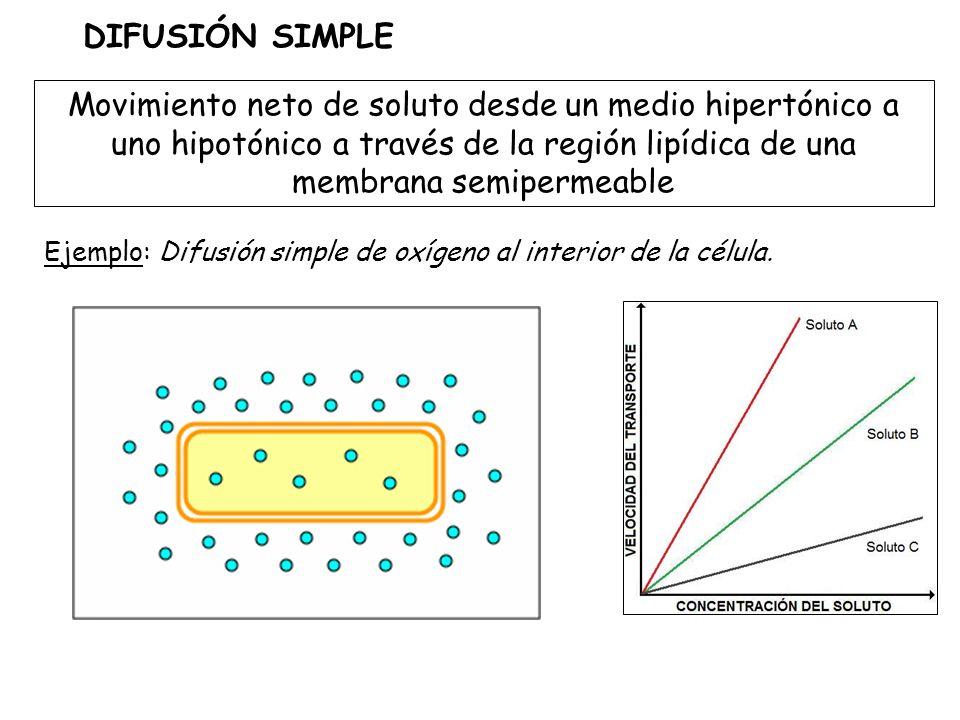 Movimiento neto de soluto desde un medio hipertónico a uno hipotónico a través de la región lipídica de una membrana semipermeable DIFUSIÓN SIMPLE Ejemplo: Difusión simple de oxígeno al interior de la célula.