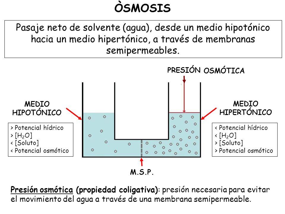 Pasaje neto de solvente (agua), desde un medio hipotónico hacia un medio hipertónico, a través de membranas semipermeables.
