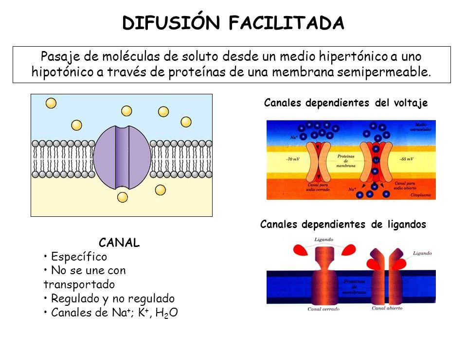 DIFUSIÓN FACILITADA Pasaje de moléculas de soluto desde un medio hipertónico a uno hipotónico a través de proteínas de una membrana semipermeable.
