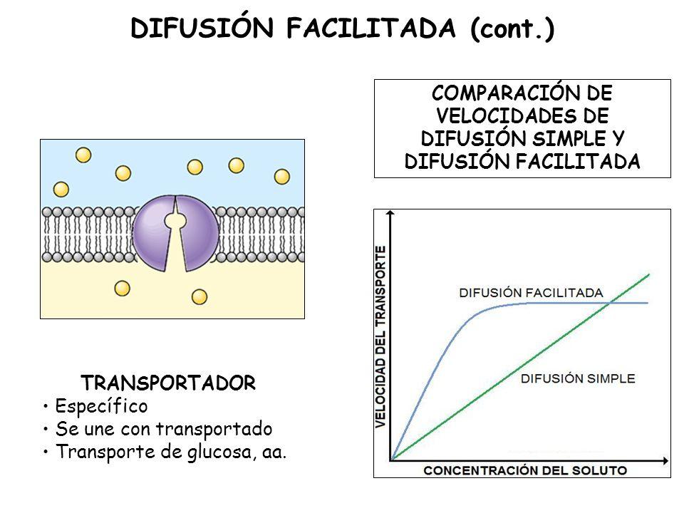 TRANSPORTADOR Específico Se une con transportado Transporte de glucosa, aa.