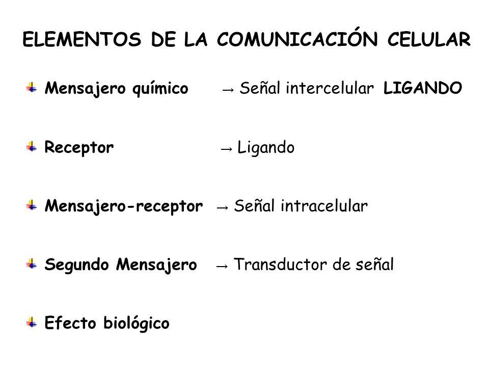 ELEMENTOS DE LA COMUNICACIÓN CELULAR Mensajero químico Señal intercelular LIGANDO Receptor Ligando Mensajero-receptor Señal intracelular Segundo Mensajero Transductor de señal Efecto biológico