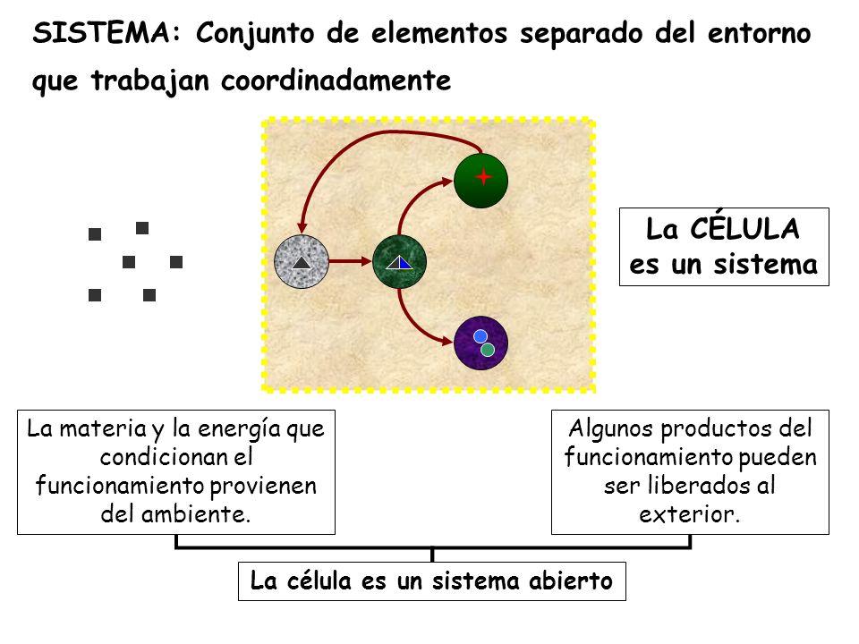 La CÉLULA es un sistema La materia y la energía que condicionan el funcionamiento provienen del ambiente.