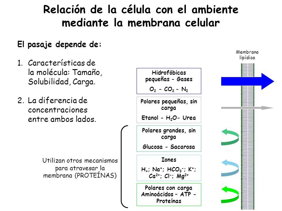 El pasaje depende de: 1.Características de la molécula: Tamaño, Solubilidad, Carga.