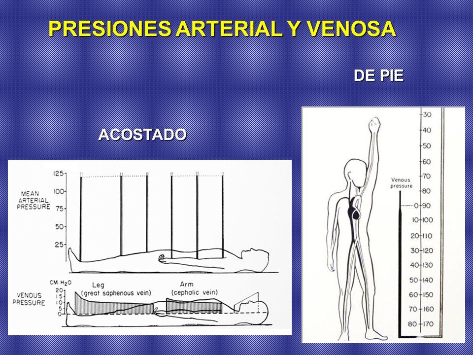 PRESIONES ARTERIAL Y VENOSA ACOSTADO DE PIE