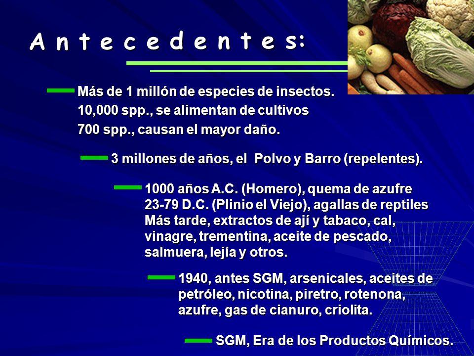 Más de 1 millón de especies de insectos. 10,000 spp., se alimentan de cultivos 700 spp., causan el mayor daño. A n t e c e d e n t e s: 3 millones de
