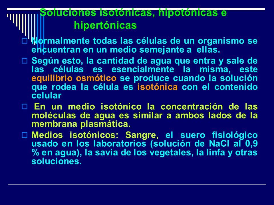 Soluciones isotónicas, hipotónicas e hipertónicas Normalmente todas las células de un organismo se encuentran en un medio semejante a ellas. Según est