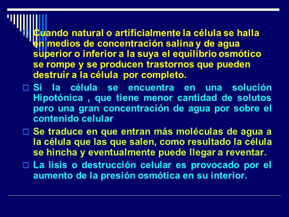 Cuando natural o artificialmente la célula se halla en medios de concentración salina y de agua superior o inferior a la suya el equilibrio osmótico s