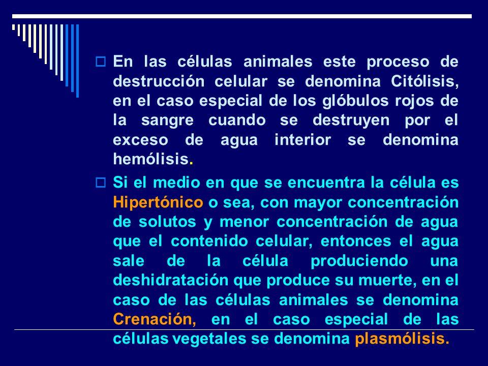 En las células animales este proceso de destrucción celular se denomina Citólisis, en el caso especial de los glóbulos rojos de la sangre cuando se de