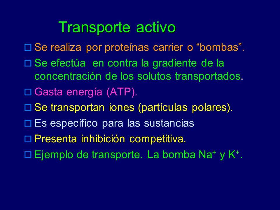 Transporte activo Se realiza por proteínas carrier o bombas. Se efectúa en contra la gradiente de la concentración de los solutos transportados. Gasta