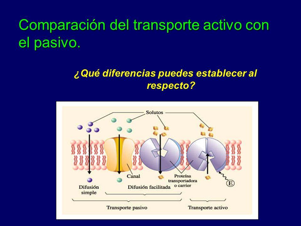Comparación del transporte activo con el pasivo. ¿Qué diferencias puedes establecer al respecto?