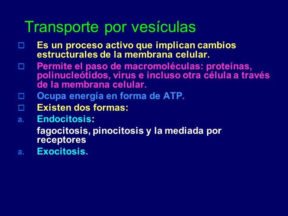 Transporte por vesículas Es un proceso activo que implican cambios estructurales de la membrana celular. Permite el paso de macromoléculas: proteínas,
