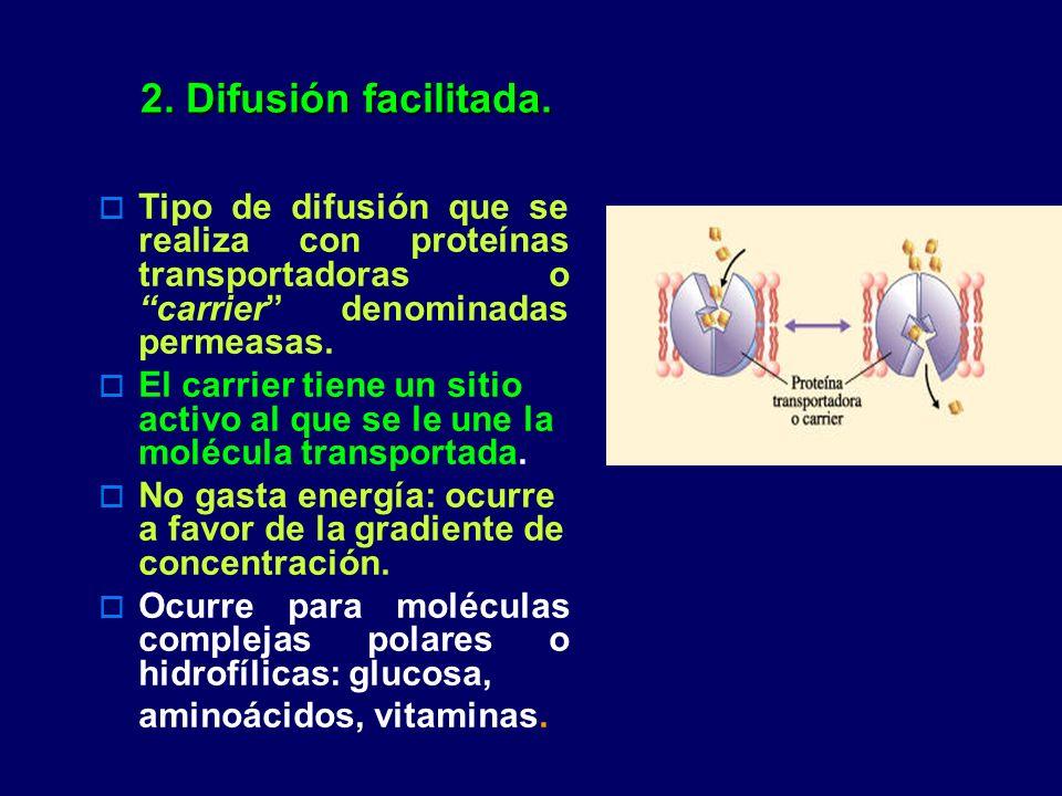 2. Difusión facilitada. Tipo de difusión que se realiza con proteínas transportadoras o carrier denominadas permeasas. El carrier tiene un sitio activ