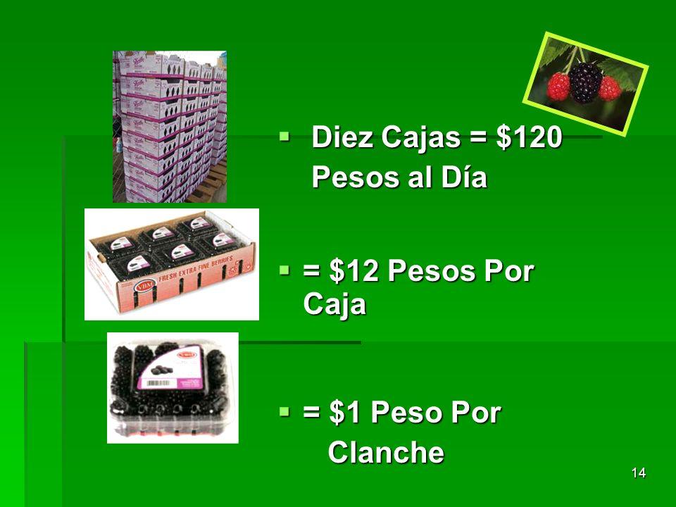 14 Diez Cajas = $120 Diez Cajas = $120 Pesos al Día Pesos al Día = $12 Pesos Por Caja = $12 Pesos Por Caja = $1 Peso Por = $1 Peso Por Clanche Clanche