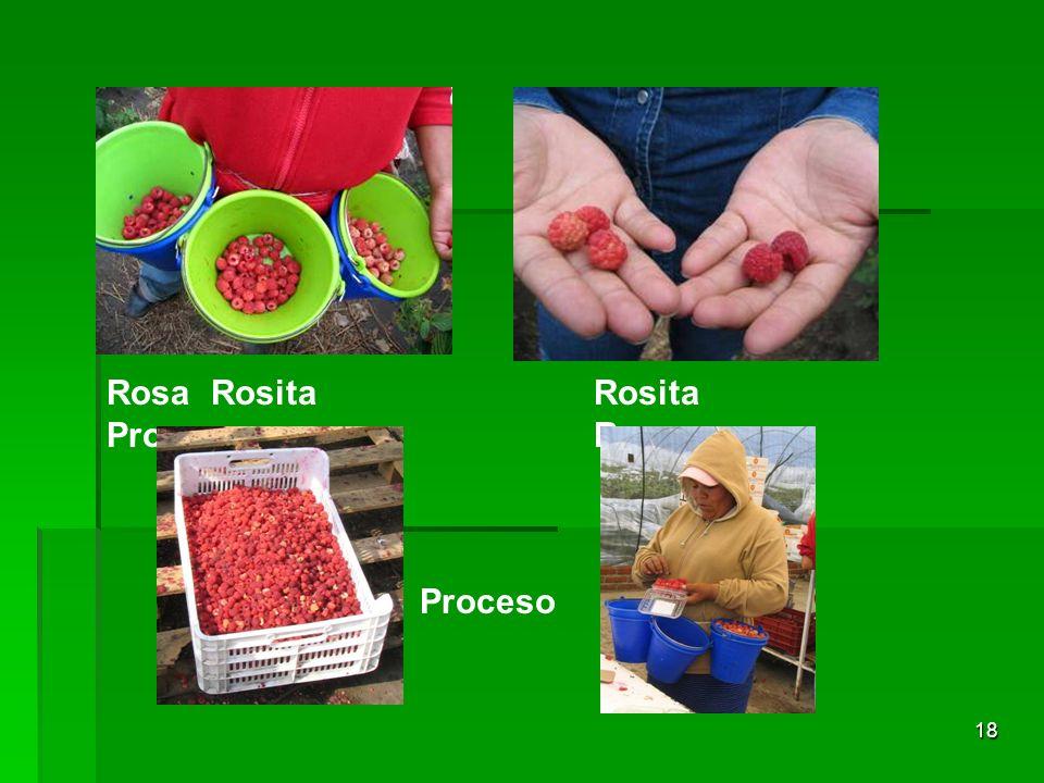 18 RosaRosita Proceso Rosita Rosa Proceso