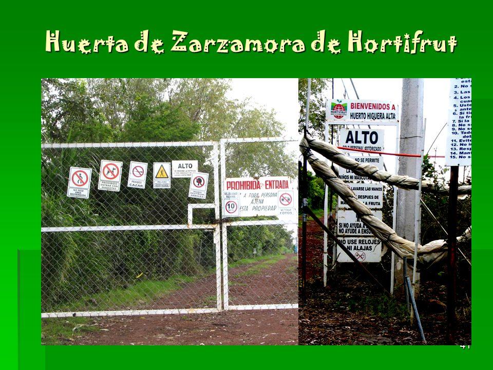 41 Huerta de Zarzamora de Hortifrut