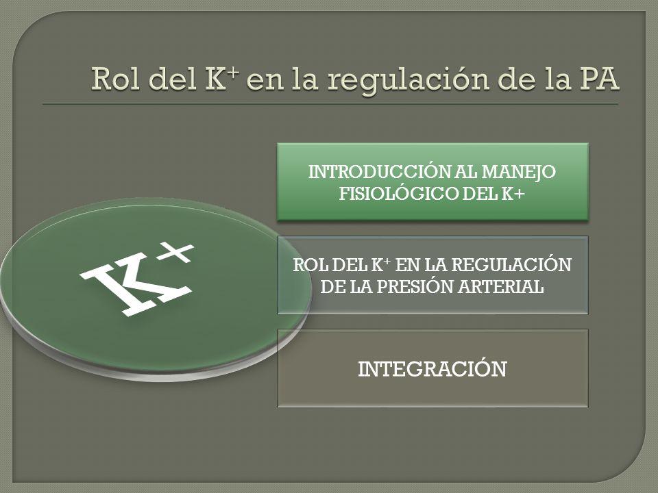 INTRODUCCIÓN AL MANEJO FISIOLÓGICO DEL K+ INTRODUCCIÓN AL MANEJO FISIOLÓGICO DEL K+ ROL DEL K + EN LA REGULACIÓN DE LA PRESIÓN ARTERIAL INTEGRACIÓN