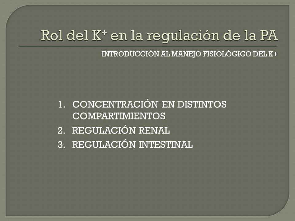 INTRODUCCIÓN AL MANEJO FISIOLÓGICO DEL K+ 1.CONCENTRACIÓN EN DISTINTOS COMPARTIMIENTOS 2.REGULACIÓN RENAL 3.REGULACIÓN INTESTINAL