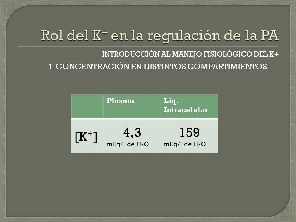 INTRODUCCIÓN AL MANEJO FISIOLÓGICO DEL K+ 1. CONCENTRACIÓN EN DISTINTOS COMPARTIMIENTOS PlasmaLiq. Intracelular [K + ] 4,3 mEq/l de H 2 O 159 mEq/l de