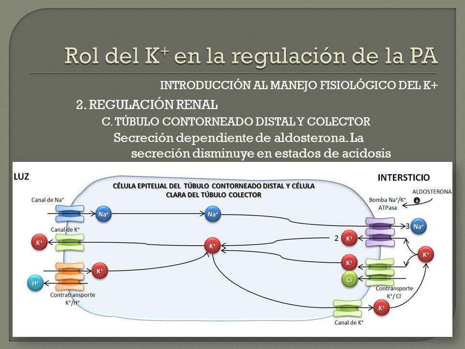 INTRODUCCIÓN AL MANEJO FISIOLÓGICO DEL K+ C. TÚBULO CONTORNEADO DISTAL Y COLECTOR 2. REGULACIÓN RENAL Secreción dependiente de aldosterona. La secreci