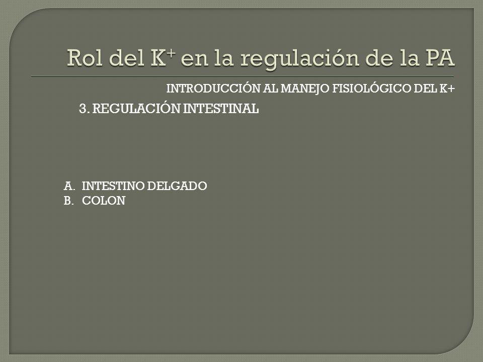 INTRODUCCIÓN AL MANEJO FISIOLÓGICO DEL K+ 3. REGULACIÓN INTESTINAL A.INTESTINO DELGADO B.COLON