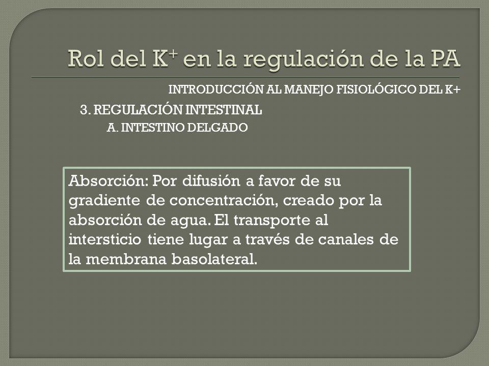 INTRODUCCIÓN AL MANEJO FISIOLÓGICO DEL K+ A. INTESTINO DELGADO 3. REGULACIÓN INTESTINAL Absorción: Por difusión a favor de su gradiente de concentraci