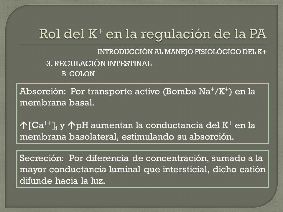 INTRODUCCIÓN AL MANEJO FISIOLÓGICO DEL K+ B. COLON 3. REGULACIÓN INTESTINAL Absorción: Por transporte activo (Bomba Na + /K + ) en la membrana basal.
