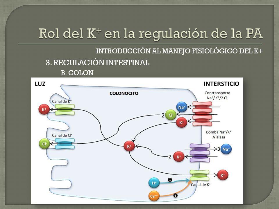 INTRODUCCIÓN AL MANEJO FISIOLÓGICO DEL K+ B. COLON 3. REGULACIÓN INTESTINAL