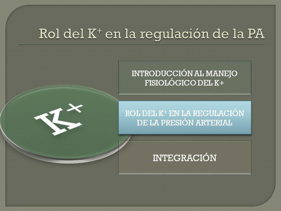 INTRODUCCIÓN AL MANEJO FISIOLÓGICO DEL K+ ROL DEL K + EN LA REGULACIÓN DE LA PRESIÓN ARTERIAL ROL DEL K + EN LA REGULACIÓN DE LA PRESIÓN ARTERIAL INTE
