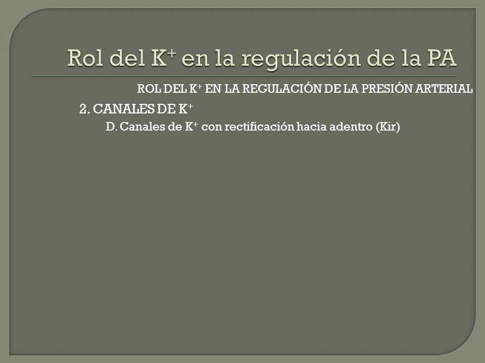 2. CANALES DE K + ROL DEL K + EN LA REGULACIÓN DE LA PRESIÓN ARTERIAL D. Canales de K + con rectificación hacia adentro (Kir)
