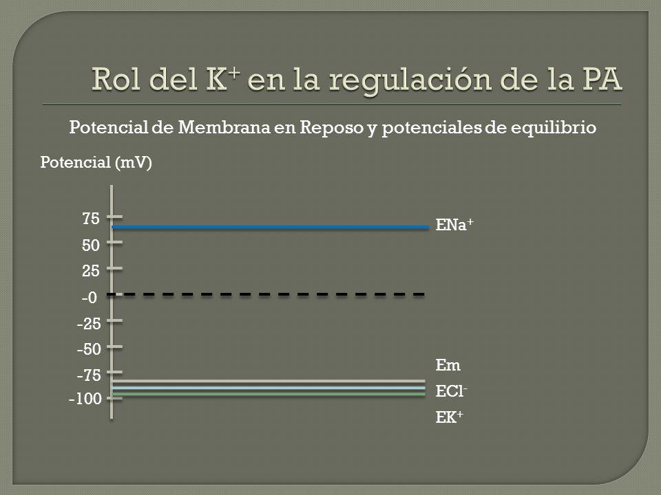 Potencial de Membrana en Reposo y potenciales de equilibrio -100 -75 -50 -25 -0 25 50 75 Potencial (mV) ENa + EK + ECl - Em